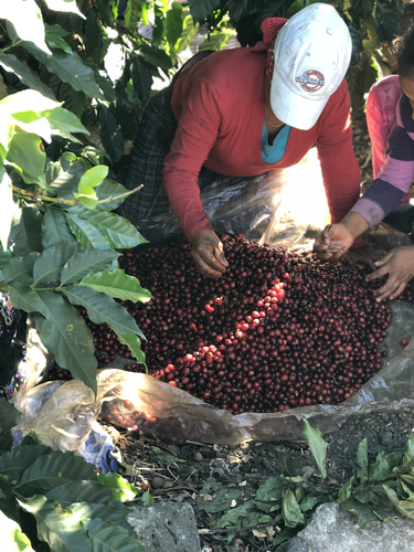 Canac Blend - Small Producers from Acatenango