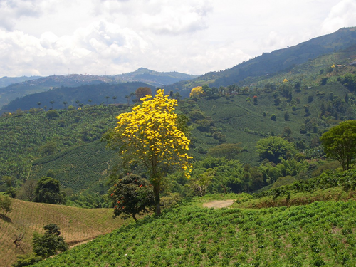 NATURAL COLOMBIA