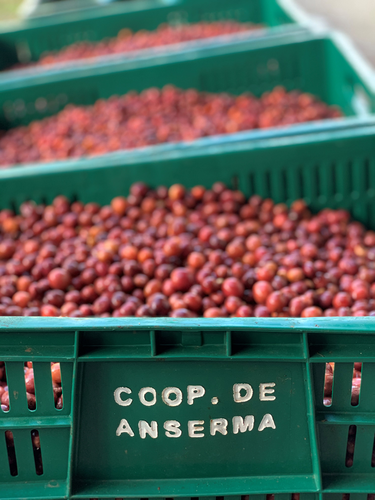 NATURAL COFFEE BERRY PROFILE