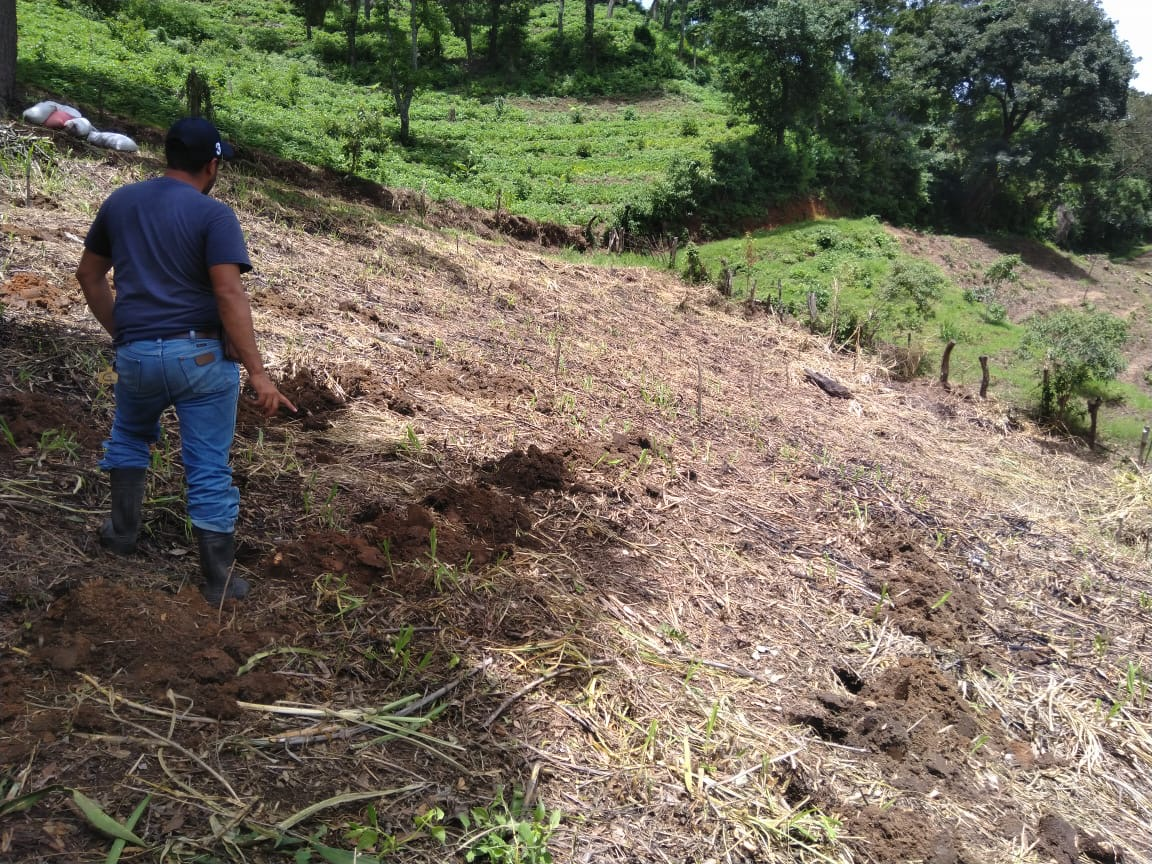 A finca waiting for new plants, for a new and bright future